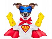 picture of incredible  - super hero dog with red cape and a blue mask - JPG