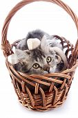 Striped Cat With A Tape In A Wattled Basket.