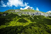 Beautiful mountain, fresh green mountainous forest, gorgeous landscape, Alpine fresh air, panoramic