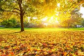 pic of foliage  - Colorful foliage in the autumn park - JPG