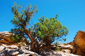 Old Weathered Tree Growing From Rock