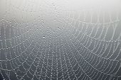 pic of cobweb  - close up of cobweb with morning dew on gray background