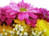 Soft Flowers2