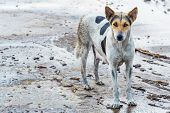 stock photo of stray dog  - Dirty female dog on wet concrete floor - JPG