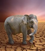 image of arid  - elephant in the arid lands - JPG