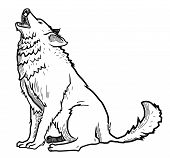 picture of wolf moon  - wolf  - JPG