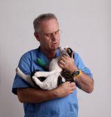 Mature vet holding domestic cat