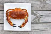 stock photo of cooked crab  - Cooked crab top view on white plate on a wooden background - JPG
