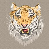 pic of growl  - closeup portrait of menacing growling amur tiger - JPG