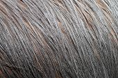 Cassowaries Plumage