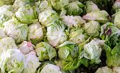 foto of iceberg lettuce  - Pile of green iceberg lettuce at a farmers market.