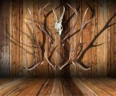 Hunting Trophies On Wood