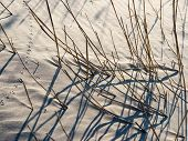 Shadows From Grass On The Beach