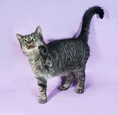 Tabby Cat With Green Eyes Standing On Purple