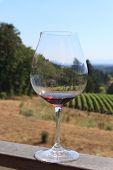 Wine tasting at the Oregon Vineyard