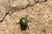 Beetle crawling on stonewall