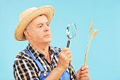 Farmer looking at a wheat straw through magnifier on blue background