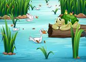 Illustration of many animals in a pond