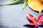 Autumn Background With Colorful Tree Leaves