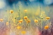 Beautiful nature - meadow flowers