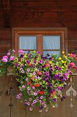 Farmstead Window With Colorful Flower Box