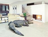 Big crocodile relax in the luxury interior (photo and cg elements combination)