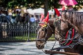 stock photo of carriage horse  - Horse Carriage waiting for tourists at the Old Square in Prague. ** Note: Soft Focus at 100%, best at smaller sizes - JPG