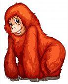 picture of chimp  - Illustration of an orangutan - JPG