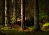 Forest In Magic Evening Light