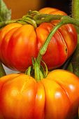 Ripe And Juicy Beefsteak Tomatoes