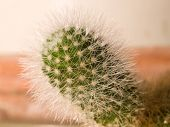 New Growth, Cactus