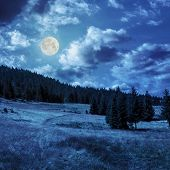 Coniferous Forest On A  Mountain Slope In Moon Linght
