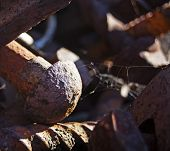 Rusty Railroad Nail And Screw Closeup