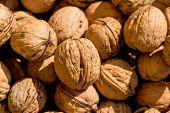 image of abundance  - many walnuts close - JPG