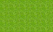 Texture Meadow