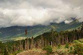 Alpine Deforestation