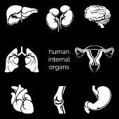 picture of internal organs  - Set of internal human organs white silhouettes in the black background - JPG