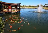 stock photo of fish pond  - Artificial pond with fountain and fish in Turkey - JPG