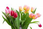 bouquet of    tulip flowers in vase