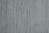 Ash-tree Texture