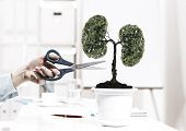 Close up of human hand cutting tree in pot with scissors