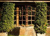 Beautiful windows hidden behind trees