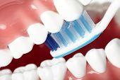 White healthy perfect teeth plastic model. Dental health.