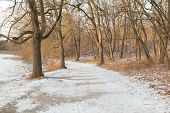 Path In The Winter With Snow And Trees