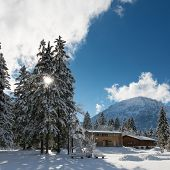 huge trees and timber cabins in winter at austrian mountains