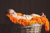 The newborn girl in a large wicker basket.
