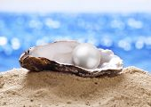 stock photo of scallop shell  - Shell with a pearl on a sea sand - JPG