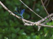 Dragonfly Flying Start