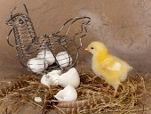 Metal wire easter basket with eggs and yellow chick