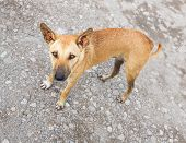 picture of stray dog  - Close up dirty stray dog standing on bumpy road and looking up to camera - JPG